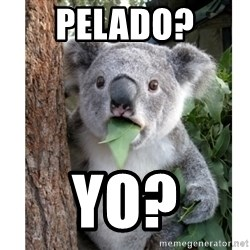 surprised koala - Pelado? Yo?