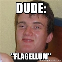 "Really Stoned Guy - DUDE: ""FLAGELLUM"""