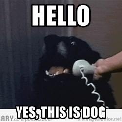 Hello This is Dog - HELLO yes, this is DOG