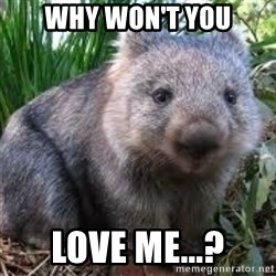 wombat - why won't you love me...?