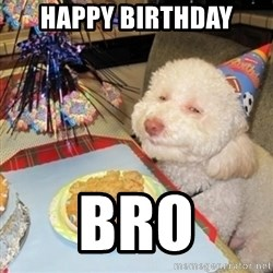 Birthday dog - happy birthday bro