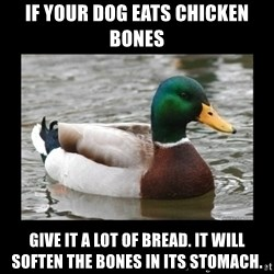 advice mallard - IF your dog eats chicken bones give it a lot of bread. it will soften the bones in its stomach.