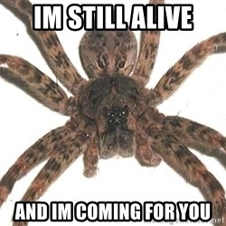 Spider - im still alive and im coming for you