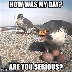 #CEFalcons - how was my day? are you serious?
