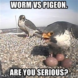 #CEFalcons - worm vs pigeon. are you serious?