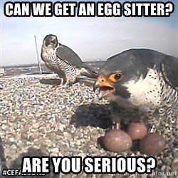 #CEFalcons - can we get an egg sitter? are you serious?