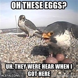 #CEFalcons - oh these eggs? Uh, they were hear when I got here