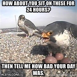 #CEFalcons - how about you sit on these for 24 hours? then tell me how bad your day was.