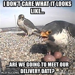 #CEFalcons - I don't care what it looks like... ...are we going to meet our delivery date?