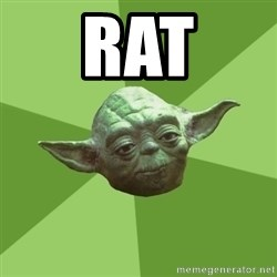 Advice Yoda Gives - Rat