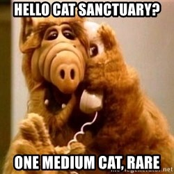 Inappropriate Alf - hello cat SANCTUARY? one medium cat, rare