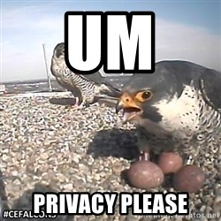 #CEFalcons - UM  PRIVACY PLEASE