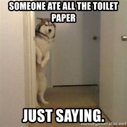 Perro del Lucho - SOMEONE ATE ALL THE TOILET PAPER JUST SAYING.