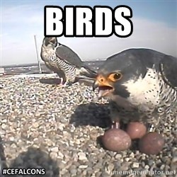 #CEFalcons - BIRDS
