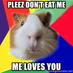 Typical guinea pig - pleez don't eat me me loves you