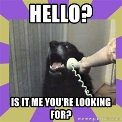 Yes, this is dog! - HELLO? IS IT ME YOU'RE LOOKING FOR?