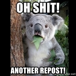 Koala can't believe it - OH SHIT! Another repost!