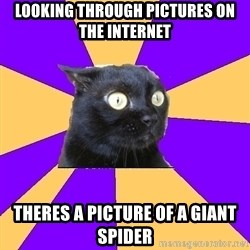 Anxiety Cat - looking through pictures on the internet theres a picture of a giant spider