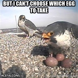 #CEFalcons - BUT I CAN'T CHOOSE WHICH EGG TO TAKE