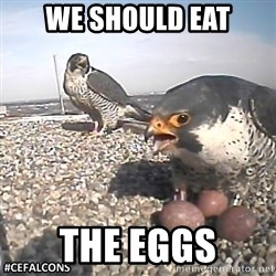 #CEFalcons - WE SHOULD EAT THE EGGS