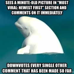 """Butthurt Beluga - Sees a minute-old picture in """"most viral: newest first"""" section and comments on it immediately Downvotes every single other comment that has been made so far"""