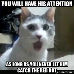 Surprised Cat - YOU WILL HAVE HIS ATTENTION AS LONG AS YOU NEVER LET HIM CATCH THE RED DOT