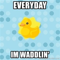 Dramadramaduck - everyday im waddlin'