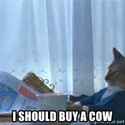 Boat cat meme -  I should buy a cow