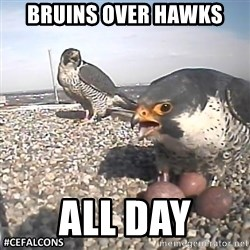 #CEFalcons - bruins over hawks All day