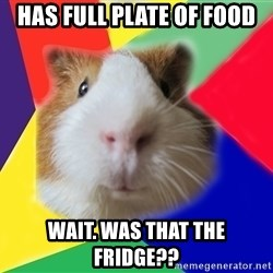Typical guinea pig - has full plate of food wait. was that the fridge??
