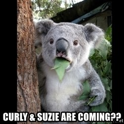 Koala can't believe it -  Curly & suzie are coming??