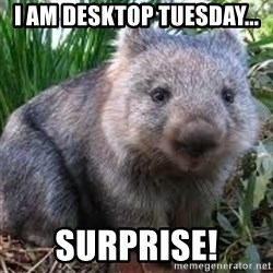 wombat - i am desktop Tuesday... surprise!
