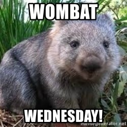 wombat - Wombat  Wednesday!