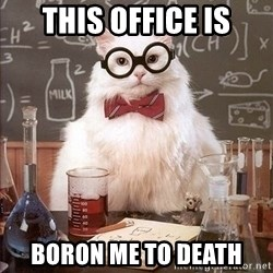 Chemistry Cat - This office is boron me to death