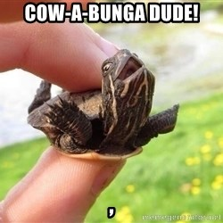 excited turtle - COW-A-BUNGA DUDE!                                                                                                                                                                             ,