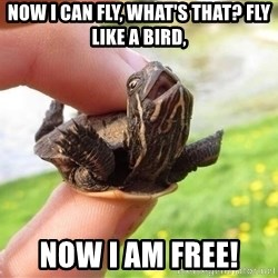 excited turtle - Now I can fly, what's that? fly like a bird, Now I am free!