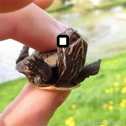 excited turtle - .