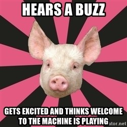 Pink Floyd Fan Pig - hears a buzz gets excited and thinks welcome to the machine is playing