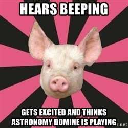 Pink Floyd Fan Pig - hears beeping gets excited and thinks astronomy domine is playing
