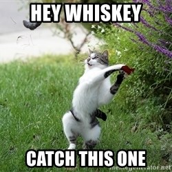 GTFO - Hey Whiskey catch this one