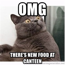 Conspiracy cat - omg there's new food at canteen