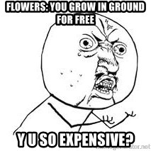 Y U SO - Flowers: You grow in ground for free Y U SO EXPENSIVE?