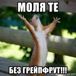 Praising Squirrel - моля те БЕЗ грейпфрут!!!