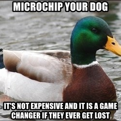 Actual Advice Mallard 1 - microchip your dog it's not expensive and it is a game changer if they ever get lost