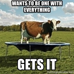 Unimpressionable Cow - wants to be one with everything gets it