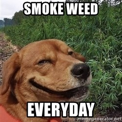 dogweedfarm - SMOKE WEED EVERYDAY