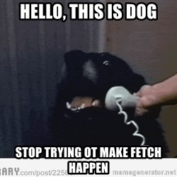 Hello This is Dog - Hello, This is dog stop trying ot make fetch happen