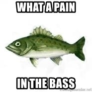 invadent sea bass - What a pain In the bass