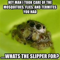 The Spider Bro - Hey man I took care of the mosquitoes, flies, and termites you had ....whats the slipper for?