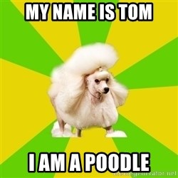 Pretentious Theatre Kid Poodle - MY NAME IS TOM  I AM A POODLE